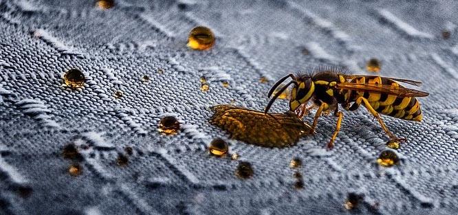 Svatba venku - hmyz