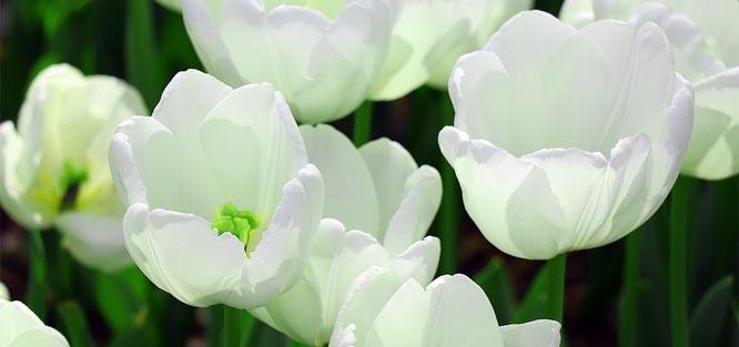 Bílé svatební květy