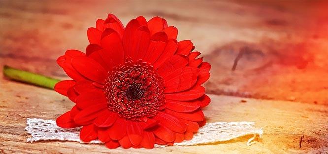 Červené svatební květy