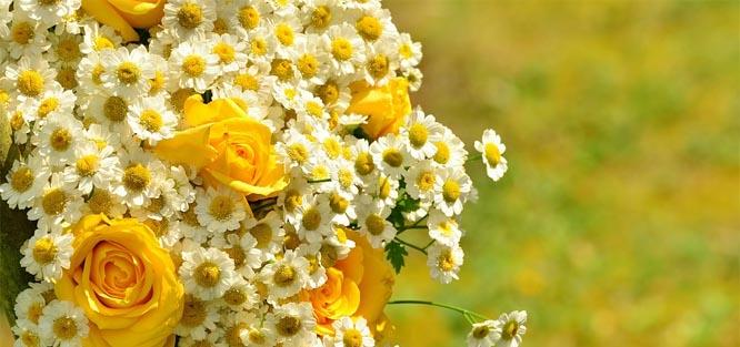 Žluté květy na svatbu