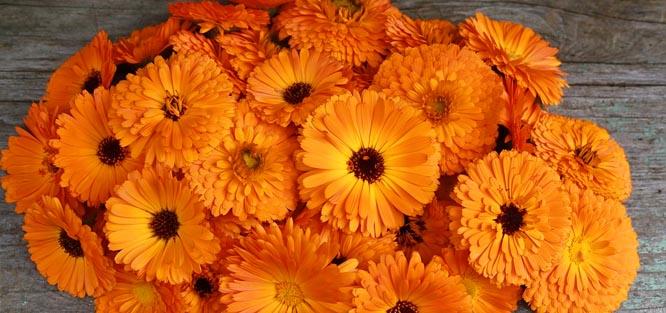 Oranžové svatební květy